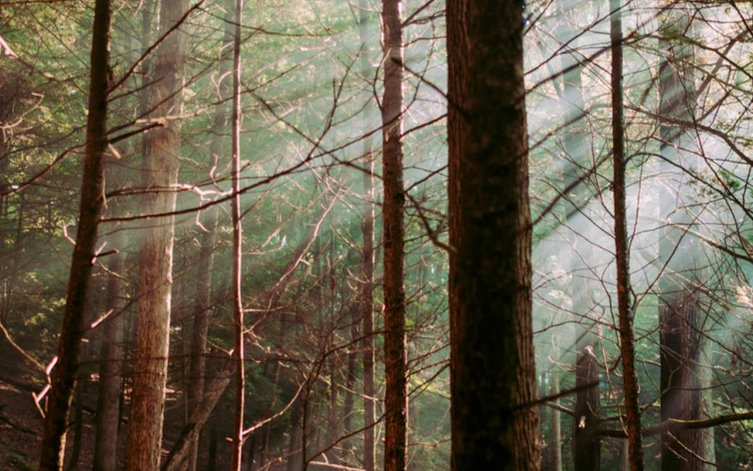 Nachhaltigkeit und das gute Holz.